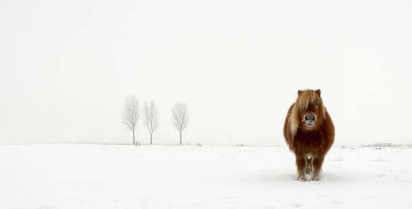 © Gert van den Bosch, Netherlands, Winner, Nature & Wildlife, Open Competition, 2014 Sony World Photography Awards