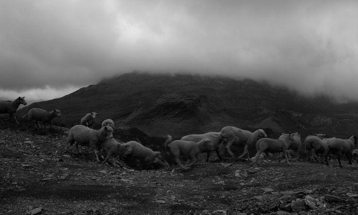 https://flic.kr/p/SWBkBN | Alps | OLYMPUS DIGITAL CAMERA