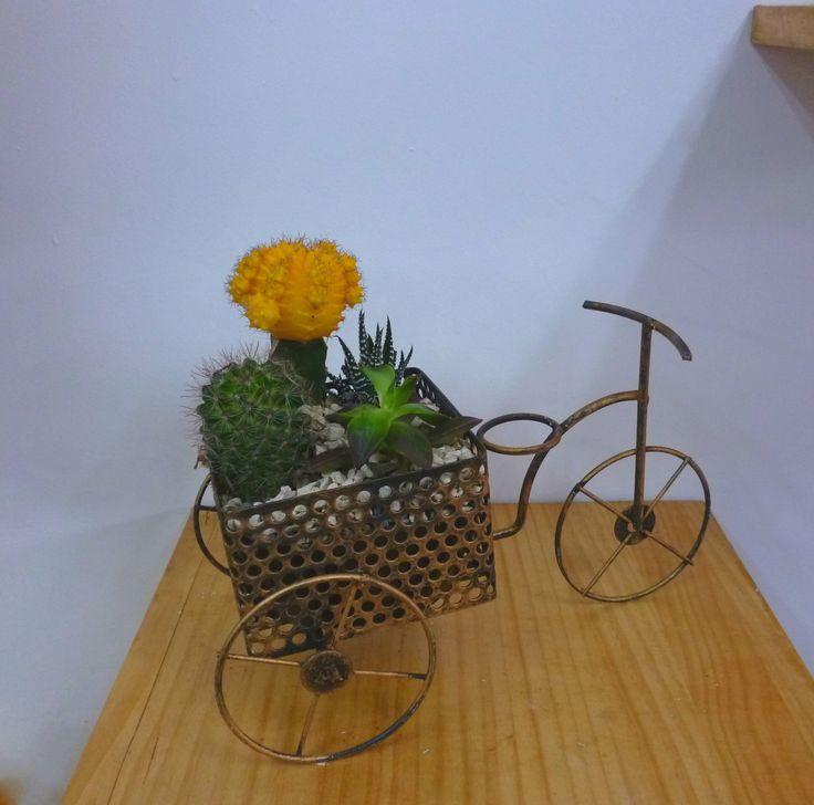 Bicicleta con terrario.