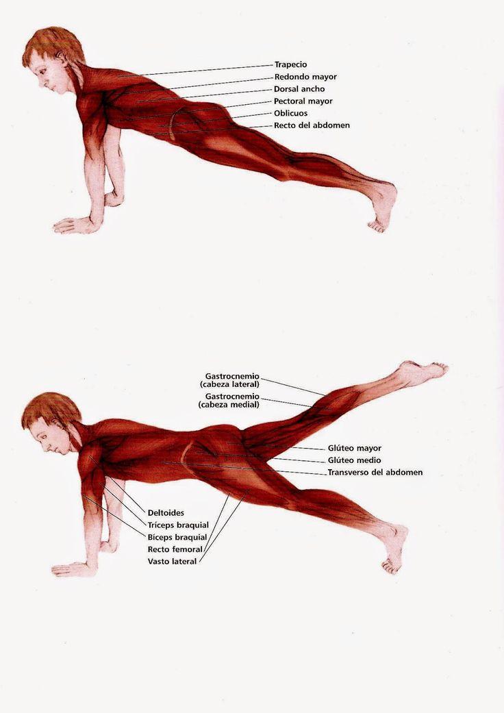 Pilates Marisa: Los básicos de Pilates: The leg pull (Tirón de pierna)