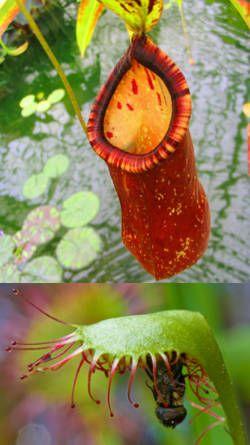 Resultado de imagen para plantas raras