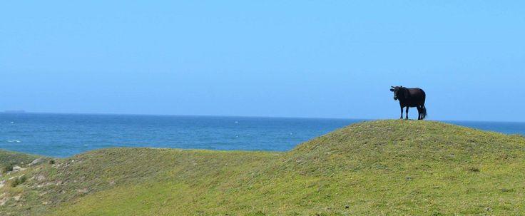 One of the Transkei big 5 !!  www.wildcoasthorsebackadventures.com?utm_content=bufferd798e&utm_medium=social&utm_source=pinterest.com&utm_campaign=buffer