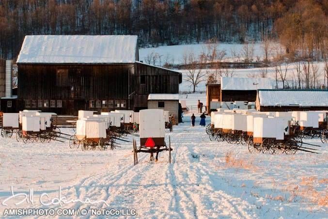 Snow White Amish Wedding ( Nebraska Amish white top buggies of Big Valley, PA ).