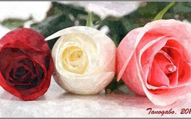Tre poeti, tre poesie e tre rose La rosa di Jorge Luis Borges, La Vecchia di Rubén Darío e Il tuo sorriso di Pablo Neruda sono le tre poesie scelte per creare questa pagina ove inserire tre elaborazioni grafiche del fiore più amato: #amore #elaborazionigrafiche #rosa