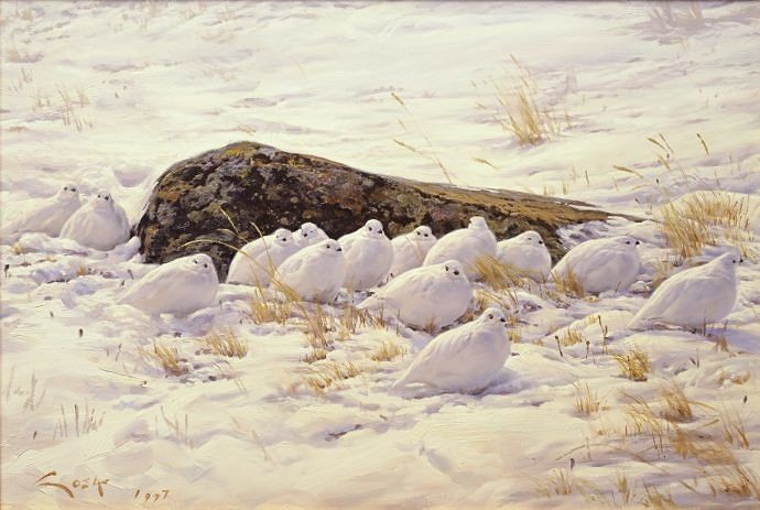 Rock ptarmigan painting - Prints on canvas
