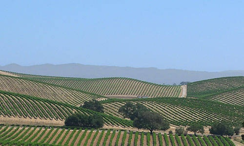 California Attractions - 12 Best  Napa valley