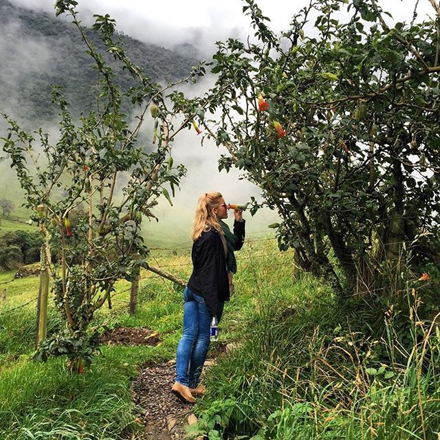 Take time to smell the #flowers. Even the gloomiest or this case, the foggiest of days can be brightened by #nature that surrounds you. #ecuador #amalavida #papallacta #fog #mist #travel #travelphotography #traveltheworld #traveltherenext