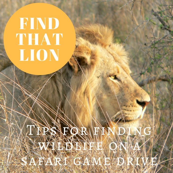 Tips on how to look for wildlife while on safari. On our site now! #wildlife #safari #kenya #africa
