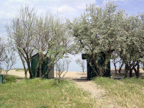Le dune e la spiaggia, Marina di Ravenna