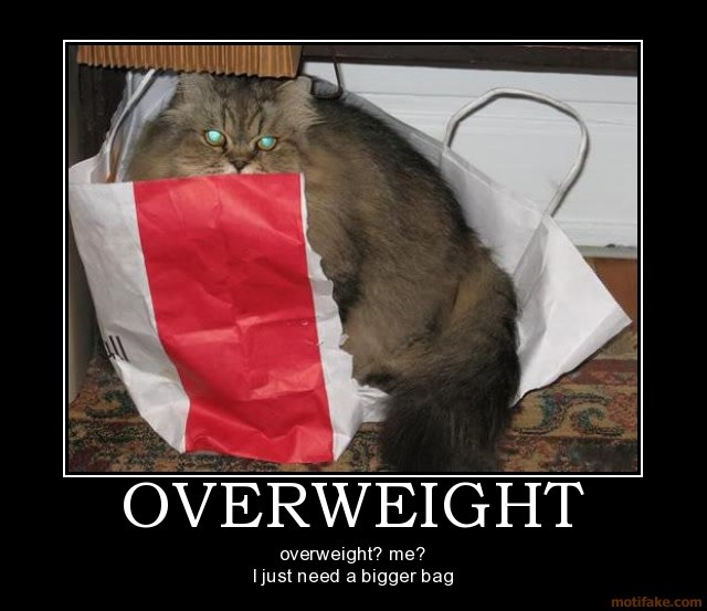 i wish it was always like this: Cat Bag, Animal Quotes, Pet, Hilarious Animal, Hate Cats, Funny, Fat Cats, Bags