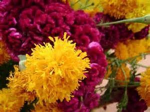 Las flores para atraer la alma de Dalí.