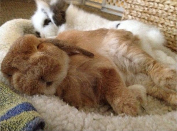 Get your rest. | One Bunny's Tips To Become King Of The Easter Egg Hunt