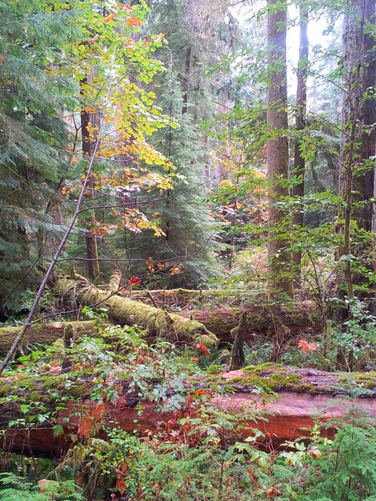 Fall in Cathedral Grove, Vancouver Island