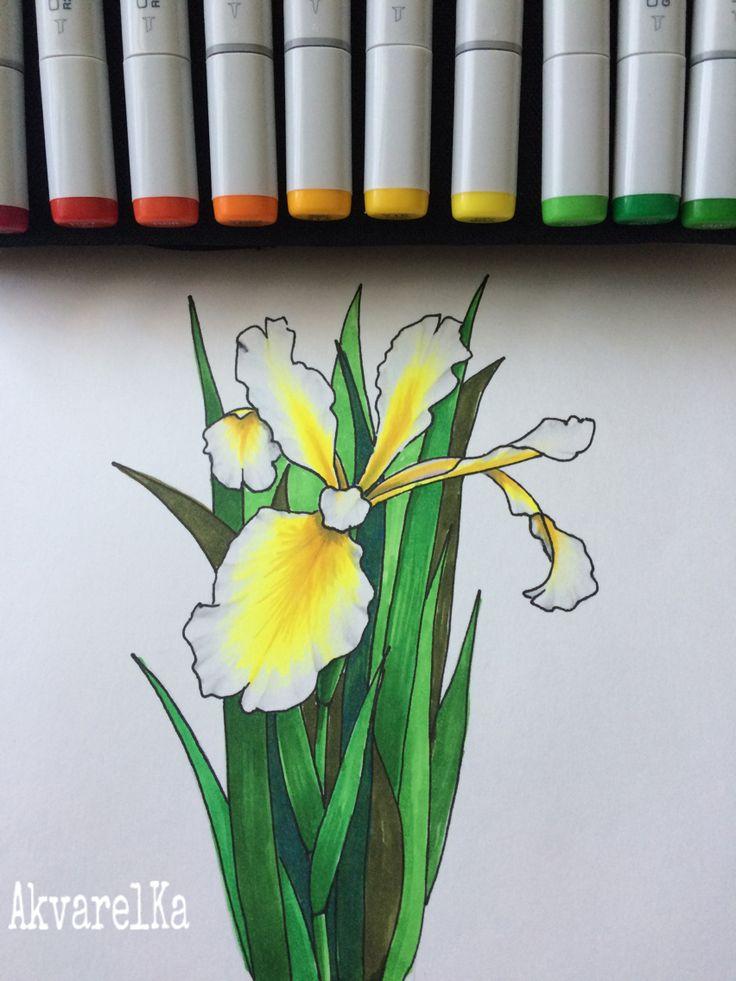 Моя работа.Ирис. Техника-скетч, маркеры Copic.It's my drawing, my favorite iris flower, sketch machinery, markers-Copic)