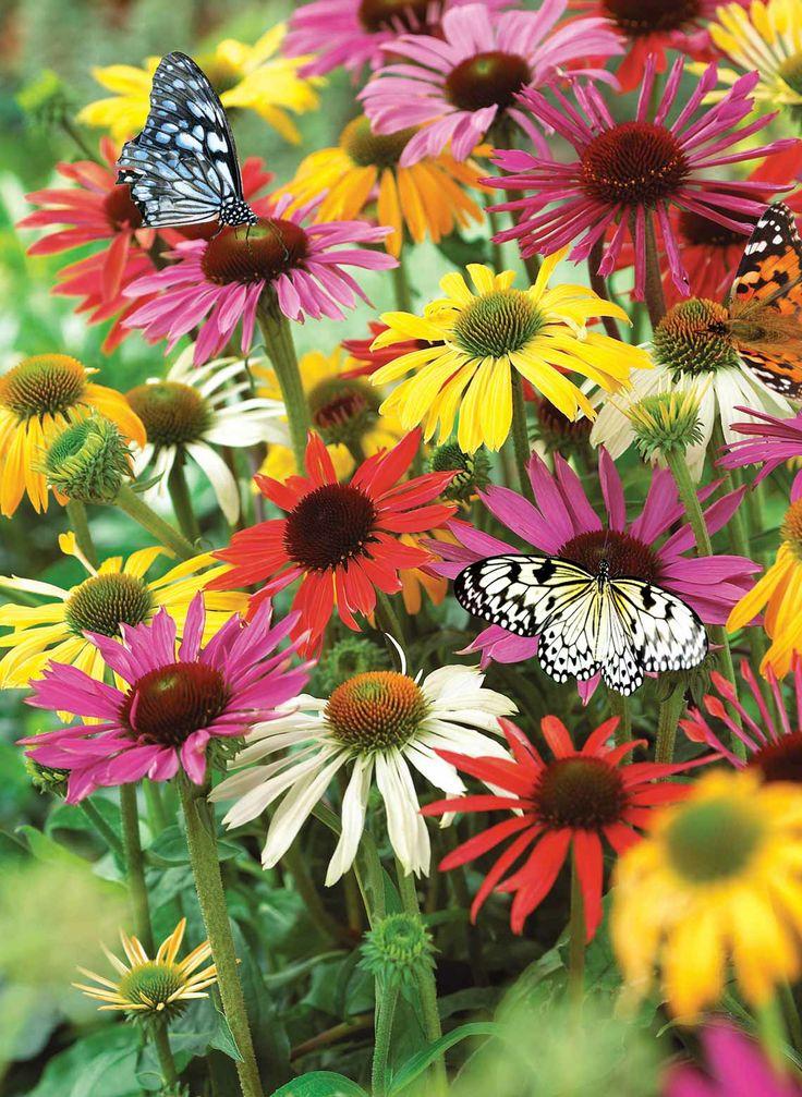 Flower Garden Ideas In Michigan 220 best diy gardening ideas images on pinterest | gardening