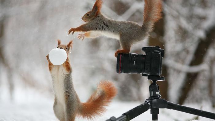 Menakjubkan, Fotografer dari Rusia Ini Berhasil Tangkap Aksi Tupai yang Sangat Lucu!