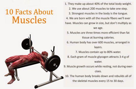 Amazing Anatomy Facts