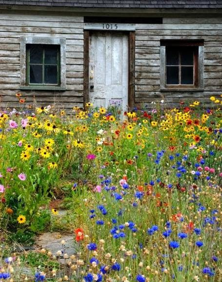 Meadow flowers- I want this look and feel in my future garden