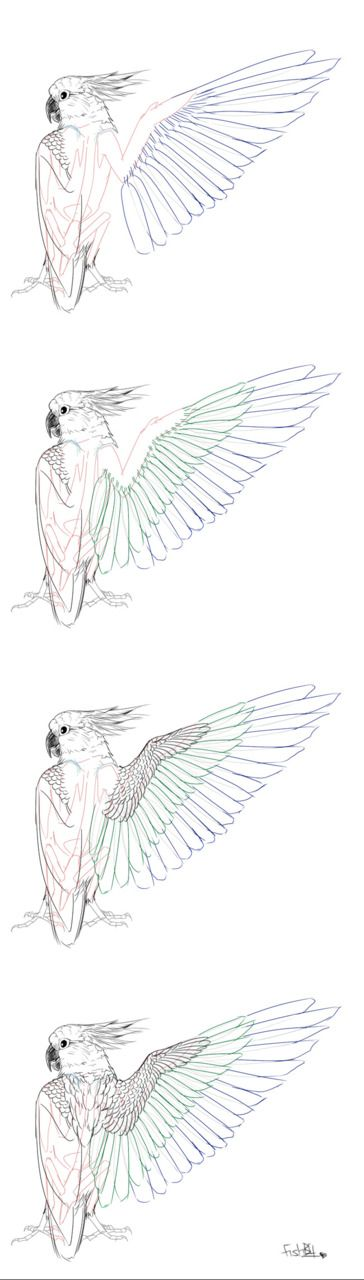 bird wings ★ || CHARACTER DESIGN REFERENCES | キャラクターデザイン • Find more artworks at https://www.facebook.com/CharacterDesignReferences & http://www.pinterest.com/characterdesigh and learn how to draw: #concept #art #animation #anime #comics || ★
