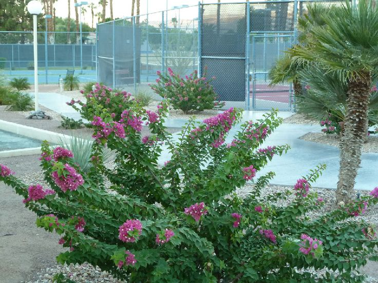 Desert Princess Tennis features nine plexi-paved courts, four which are lit, set in a tennis garden