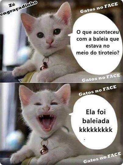 Gatinho 13