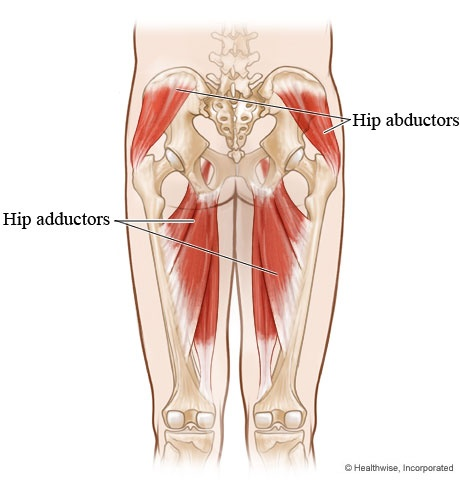 39 best hip abductor images on pinterest | health, hip stretches, Sphenoid