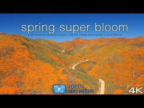 Nature Relaxation Films - YouTube | Nature