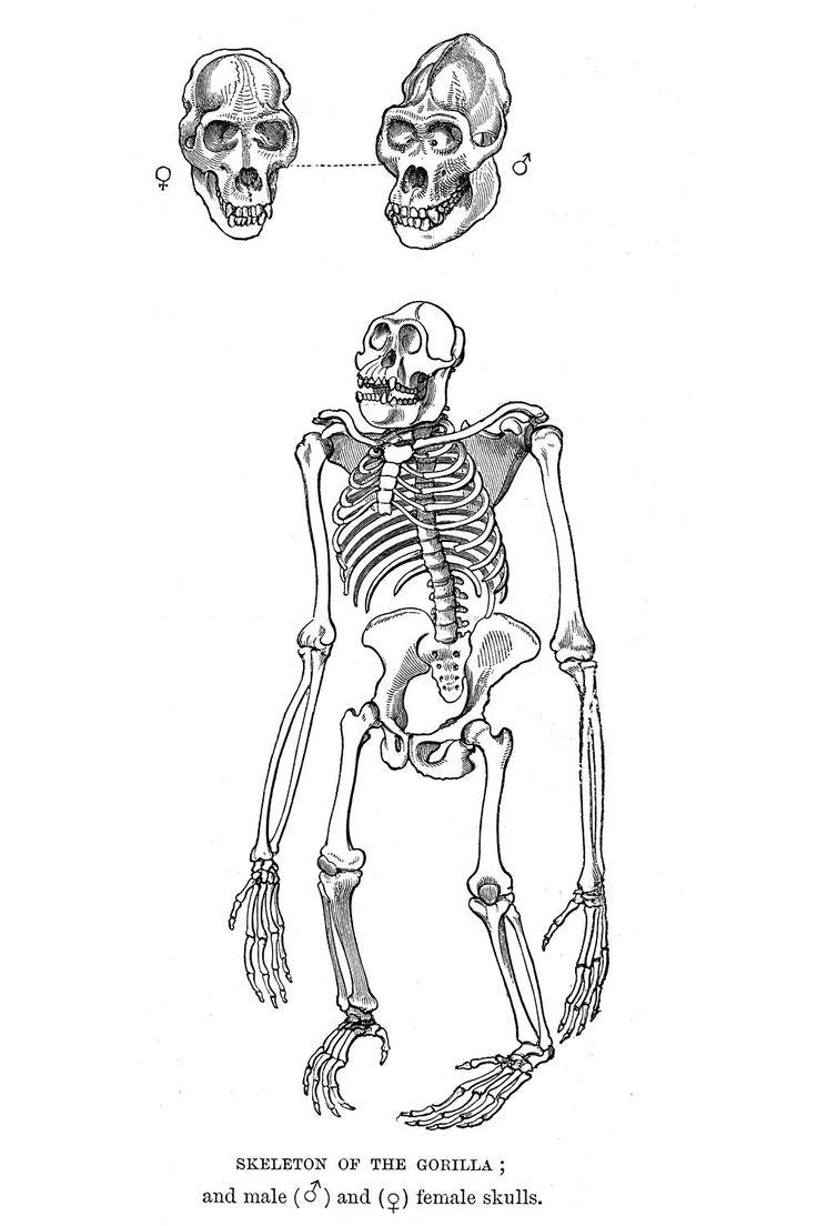 50 best Animal Anatomy images on Pinterest | Animal anatomy, Draw ...