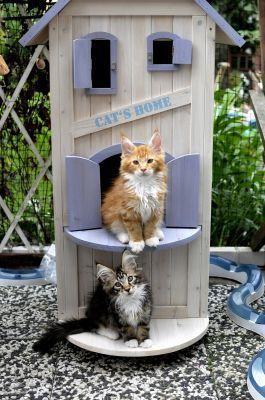 Maisonnette pour chats. Photo de Doro. En vente sur Zooplus.