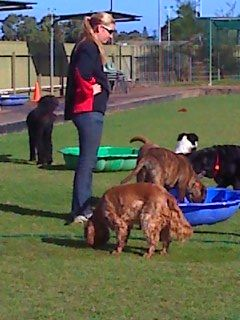 HOLDFAST DOG CENTRE - DOGGY DAY CARE. $35 per day.