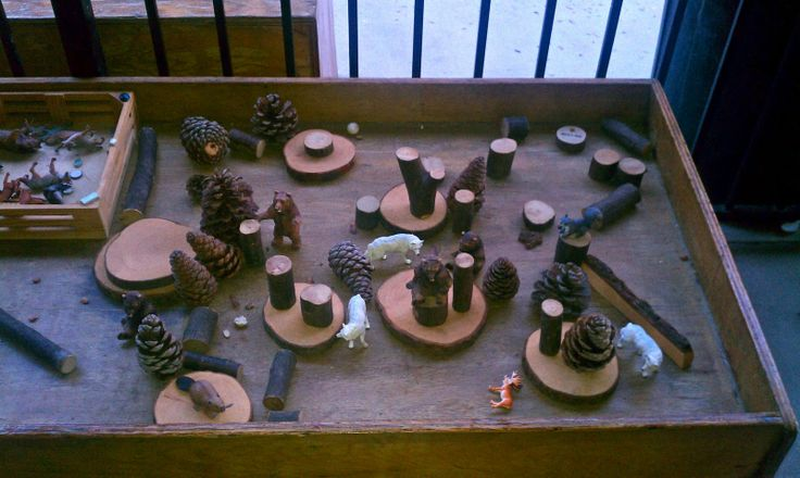 Tree slices, pine cones and branch blocks...