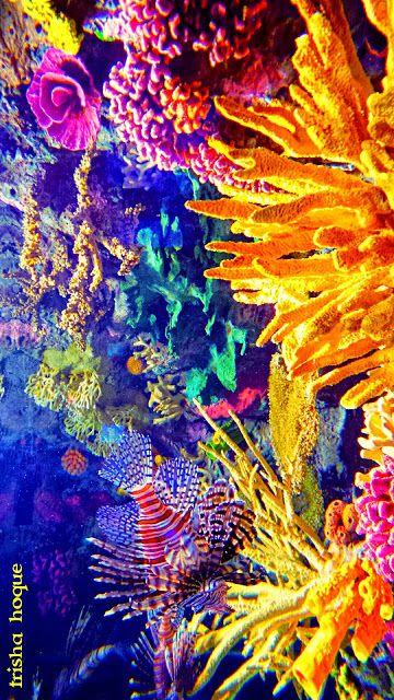 Coral reefs                                                                                                                                                                                 Más