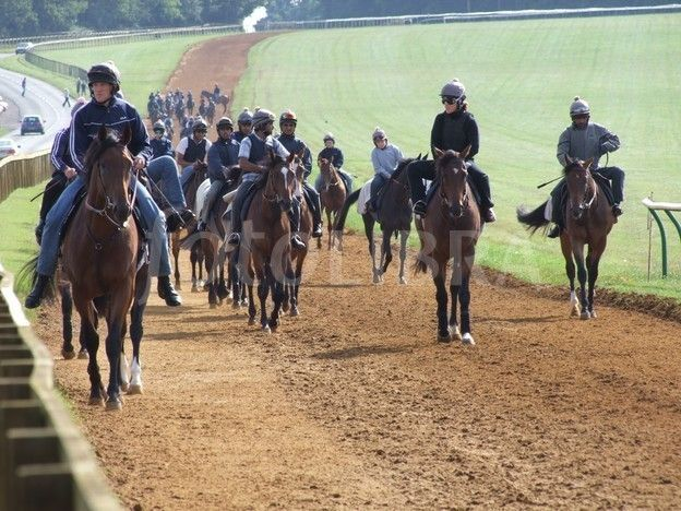 newmarket gallops - Google Search