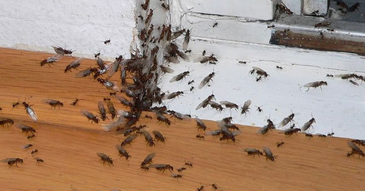 Instead Of Paying An Exterminator Hundreds To Get Rid Of Ants, Try This $2 Solution : AWM