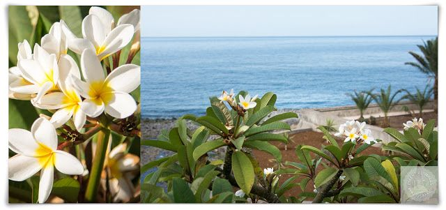 When is it Best to Go to Madeira to see the Flowers