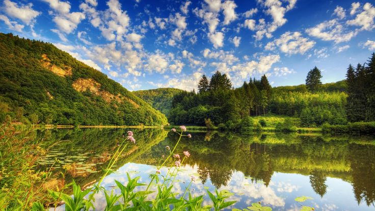 Yemyeşil Bir Bölgedeki Büyük Durgun ve Çevresini Yansıtan Full HD Muhteşem Göl Manzarası
