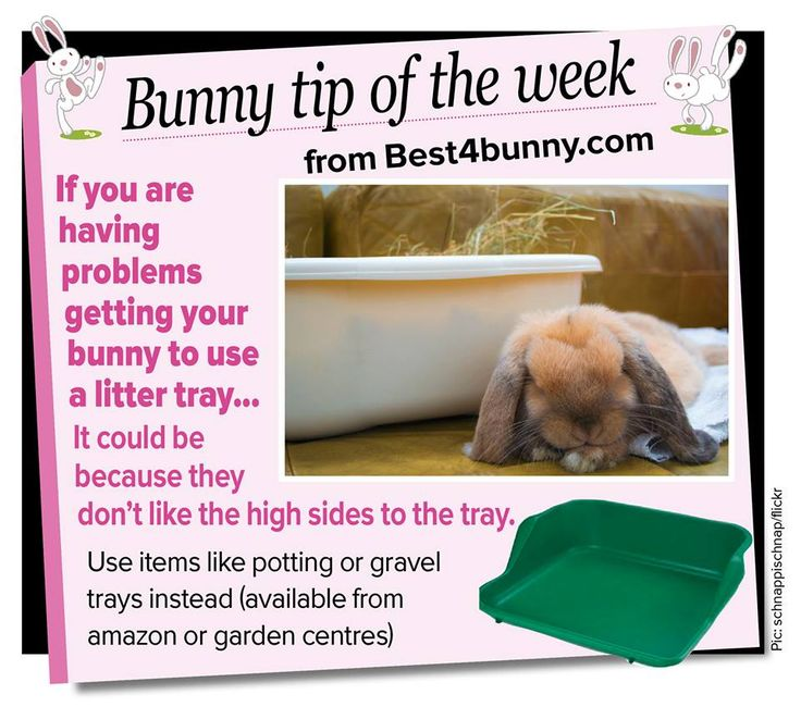 how to litter train a bunny in a cage