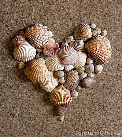 Best 25+ Seashell island ideas on Pinterest | Sanibel island ...