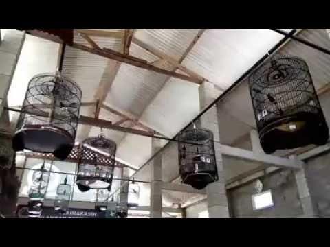 MURAI BATU PERANG BINTANG 2016