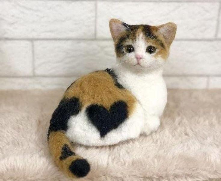 Beautiful Kitty Wonderful Cats Cats Kitty Beautiful Wonderful Katzen Cats And Kittens Cat Love Baby Animals Funny