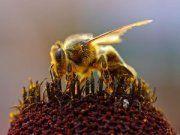 Le mille proprietà del polline di api: la più ricca e completa fonte di minerali, vitamine, enzimi ed aminoacidi presenti in natura! http://www.macrolibrarsi.it/speciali/il-polline-di-api-proprieta-e-utilizzo.php?pn=3148