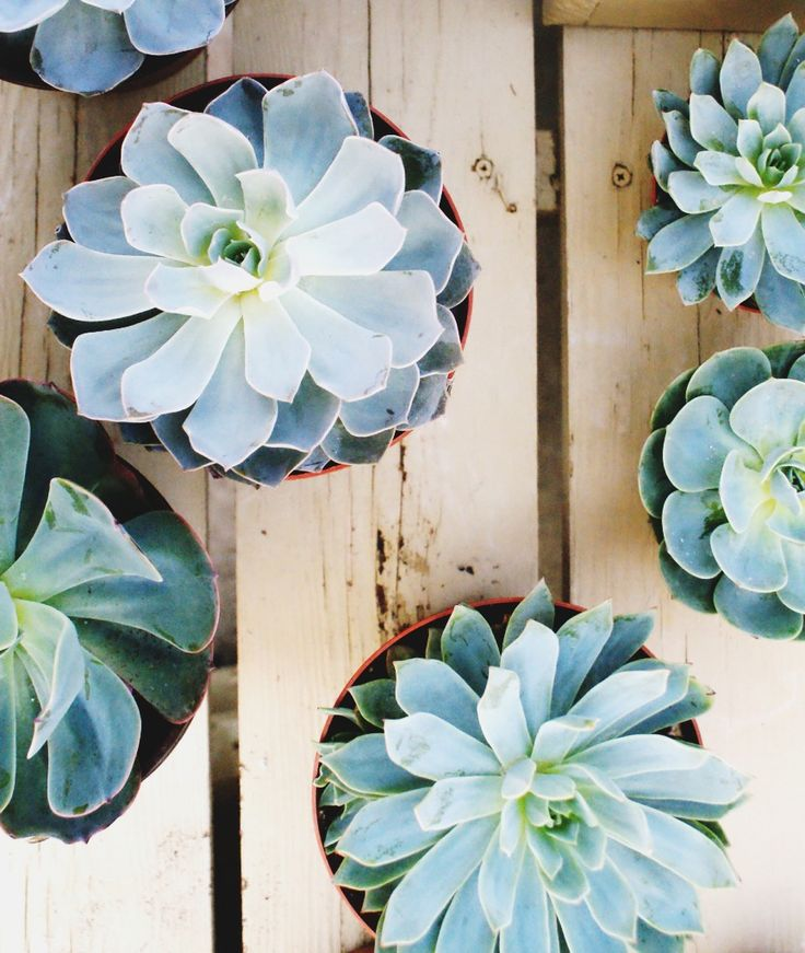 Looking for a low maintenance house plant succulents thrive with minimal effort and add an eye - House plants low maintenance ...