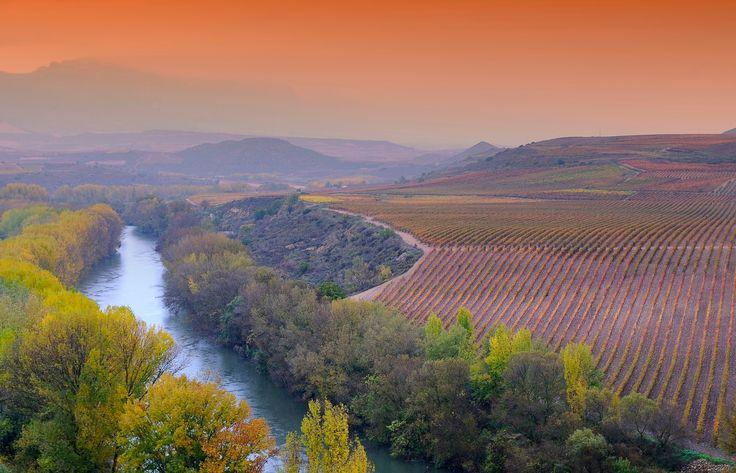 Vineyards in La Rioja, Spain. - Vineyards in the province of La Rioja in spain.