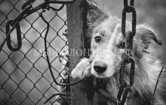 Пронзительное стихотворение Роберта Рождественского о собаках и несправедливости  http://xn----dtbjxcjfbus6gj.xn--p1ai/society/%d0%bf%d1%80%d0%be%d0%bd%d0%b7%d0%b8%d1%82%d0%b5%d0%bb%d1%8c%d0%bd%d0%be%d0%b5-%d1%81%d1%82%d0%b8%d1%85%d0%be%d1%82%d0%b2%d0%be%d1%80%d0%b5%d0%bd%d0%b8%d0%b5-%d1%80%d0%be%d0%b1%d0%b5%d1%80%d1%82%d0%b0/ Стихи Роберта Рождественского – это всег