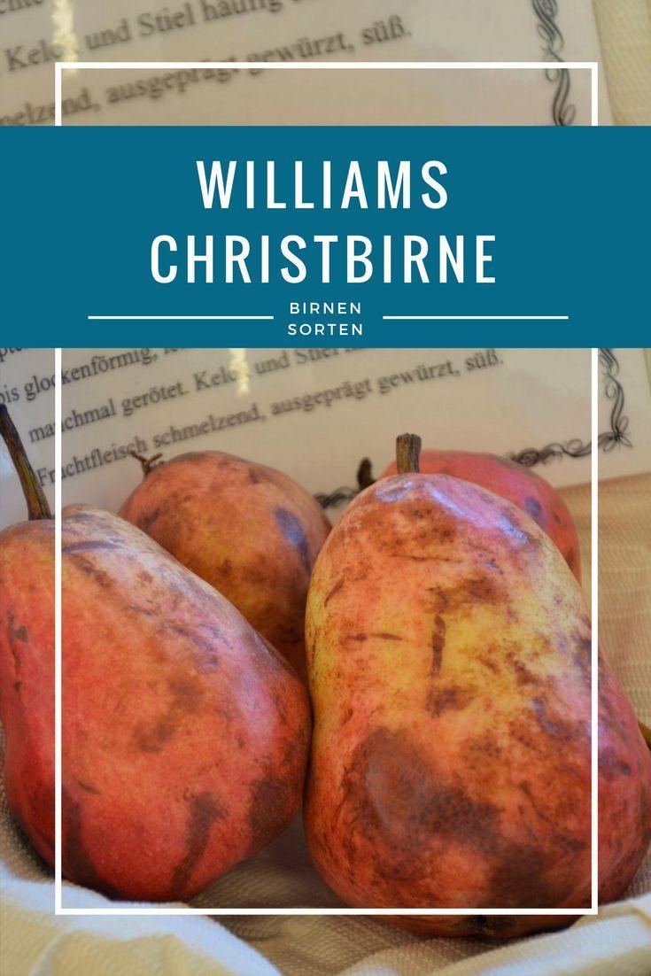 Die rote Williams Christbirne ist eine Besonderheit unter den Birnensorten. Durch ihre attraktive rote Schale verführt sie zum Reinbeißen. Auch das saftig-süße Fruchtfleisch ist bemerkenswert. Durch ihren wunderbaren Geschmack und dem tollen Muskataroma ist die rote Williams Christbirne perfekt zur Herstellung von Obstbränden geeignet, aber überzeugt auch sonst in der Küche.