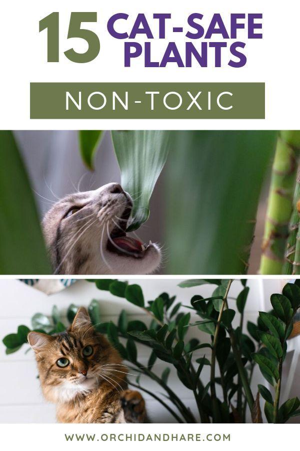 15 Low Maintenance Plants That Are Safe For Cats Cat Safe Plants