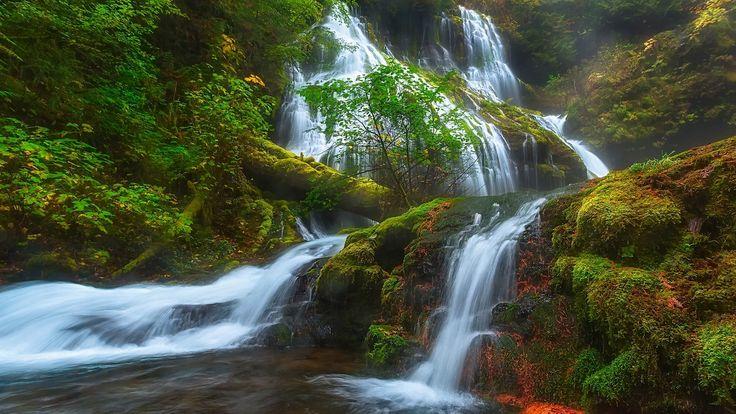 Скачать обои Skamania, водопад, Скамейния, Washington, мох, штат Вашингтон, ущелье реки Колумбия, Panther Creek Falls, Columbia River Gorge, лес, каскад, раздел пейзажи в разрешении 1920x1080