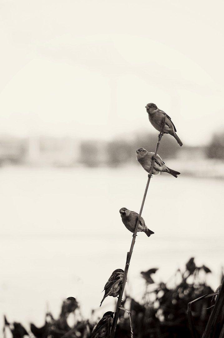 Черно-белое и ретро фото