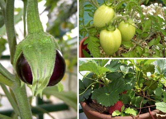 Consejos para empezar tu Huerta Organica.