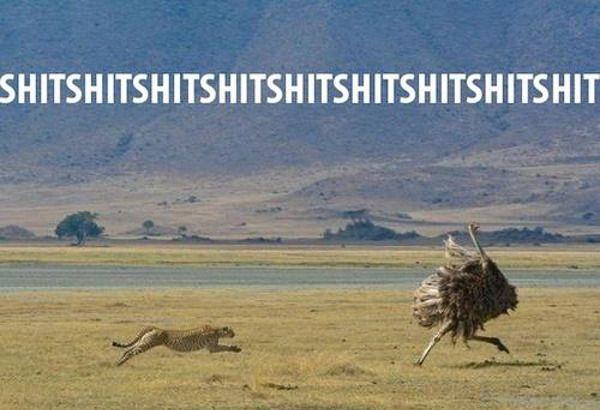 Oh, a cheetah. Think I'll run.